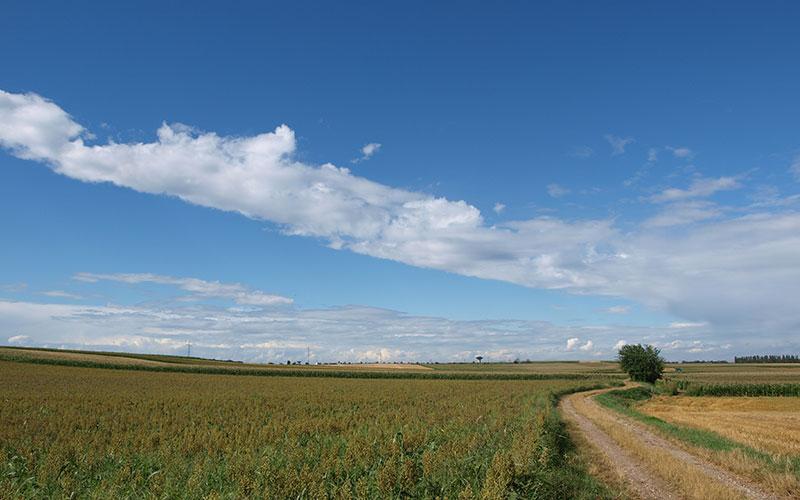 Les grandes terres à Saint-Symphorien-d'Ozon